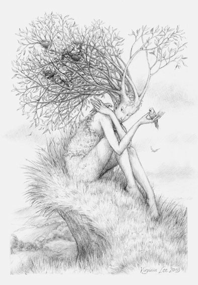 tree nymph